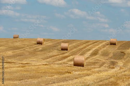 Obraz na plátne A haystack left in a field after harvesting grain crops