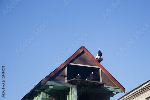 Fotografia doves in the dovecote,wooden dovecote