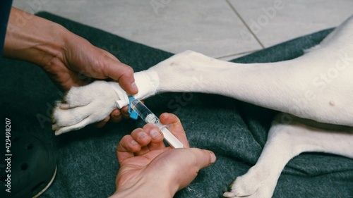 Fotografie, Tablou Medicaments injection to intravenous cannula