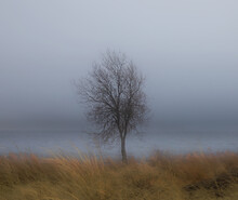Stark Tree Against Lake With Fog And Mist And Golden Field
