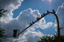 Pigeons In The Semaphore