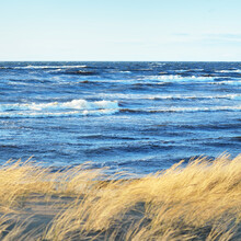A View The Baltic Sea Shore At Sunset. Sand Dunes And Plants (dune Grass, Ammóphila) Close-up. Waves And Water Splashes. Idyllic Seascape. Early Spring In Latvia. Eco Tourism, Environment, Ecology