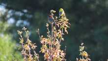 Two Different Finches