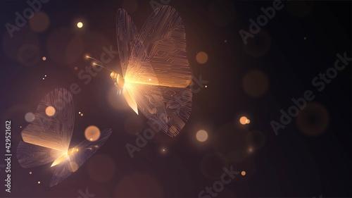Fototapeta Two golden glowing butterflies with circuit wings on a dark background obraz