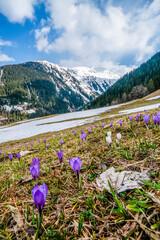 Frühling in den Bergen
