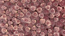 Vibrant Flowers Arranged To Create A Elegant Wall. Colorful, Red Background Formed From Beautiful Roses. 3D Render