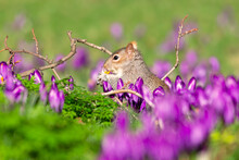 Squirell Eating Flowers