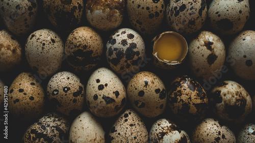 Fotografie, Obraz Quail eggs on the farm on a table
