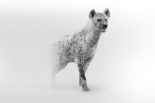 Spotted Hyena African Wildlife Animal Art Collection