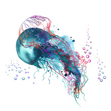 Blue Jellyfish Clipart, Watercolor And Graphic Illustration.