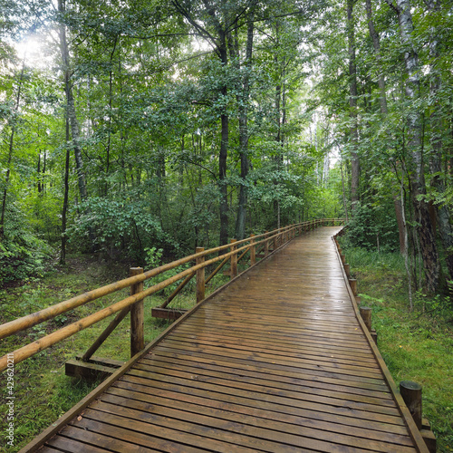 Modern wooden winding pathway (boardwalk) through green deciduous trees in public park. Environmental conservation in Denmark. Rainforest, eco tourism, recreation, cycling, nordic walking themes
