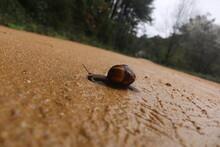 Snail On A Rainy Day