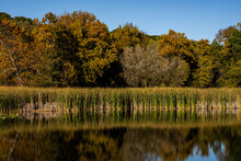 Cattails Reflect In Still Pond In Early Fall