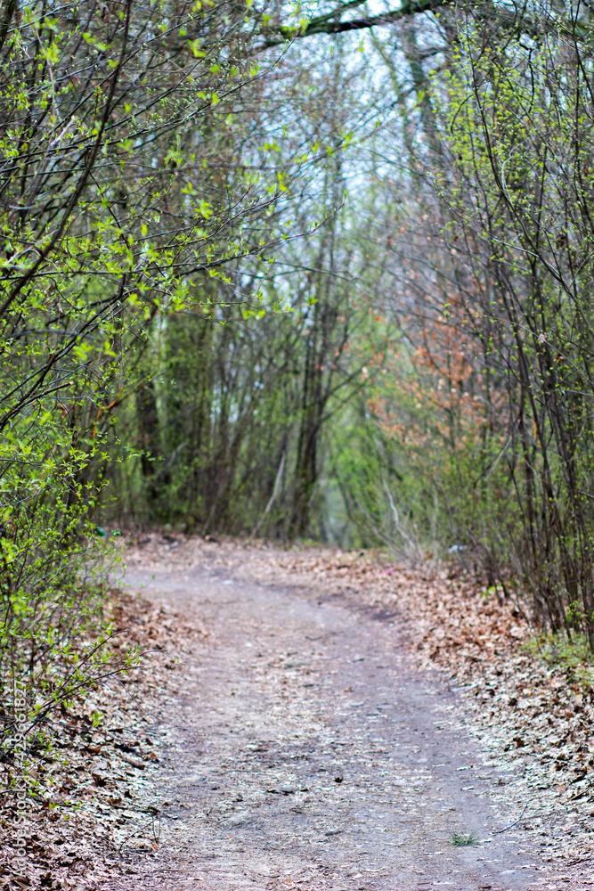 Fototapeta Wiosna w lesie na drodze