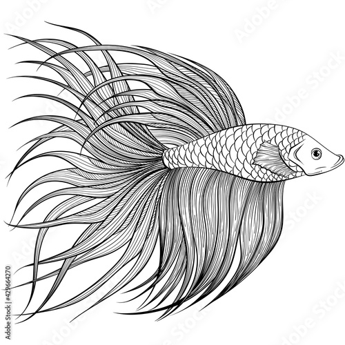 Billede på lærred Betta fish or Siamese fighter fish side view in hand drawn line art style