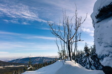 A Leafless Tree In Winter In Front Of Clear Blue Cloudy Sky, Winter Hilly Landscape, Jeseniky
