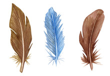 Watercolor Feather Set. Hand Drawn Bird Feathers Clipart.