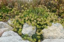 Winter Bush Among The Rocks
