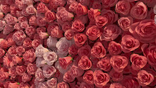 Bright, Colorful Flower Blooms Arranged In The Shape Of A Wall. Romantic, Elegant, Roses Composed To Create A Pink Floral Background. 3D Render