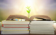 World Philosophy Day Education Concept: Tree Of Knowledge Planting On Opening Old Big Book In Library With Textbook  In Natural Background