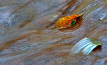 A Colorful Decayed Leaf On A Waterfall Stone