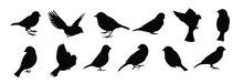Set Of Black Bird Silhouettes. Vector Elements For Design.