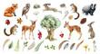 Leinwandbild Motiv Forest wild animal big set. Watercolor illustration. Fox badger rabbit deer and chipmunk. Bunny, owl bird, toad, feather, leaf. Natural element collection. Realistic woodland set on white background