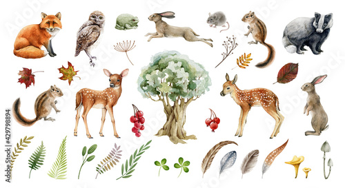 Fotografía Forest wild animal big set