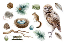 Owl Bird Forest Set. Natural Woodland Elements Watercolor Illustration. Owl, Chipmunk, Mouse, Toad, Nest, Feather, Branch Hand Drawn Elements. Forest Rustic Sticker Collestion. On White Background