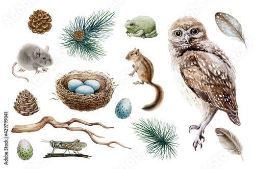 Owl bird forest set. Natural woodland elements watercolor illustration. Owl, chipmunk, mouse, toad, nest, feather, branch hand drawn elements. Forest rustic sticker collestion. On white background - fototapety na wymiar