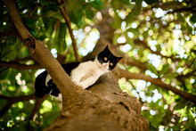 Bottom View Of Black And White Cat Sitting On Tree Branch
