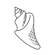 Triton Seashell .Hand Drawn Marine Set. Sea Shells Doodle Collection. Vector Illustration In Sketch Style.