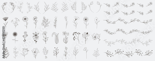 Big set of simple vector flowers and leaves. Flat line design. Set of elegant floral elements for graphic and web design. Decorative vintage line elements collection. Vector illustration. - fototapety na wymiar