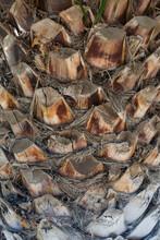 Palm Trunk, Texture