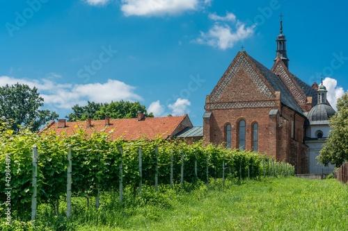 winnica w Sandomierzu - fototapety na wymiar