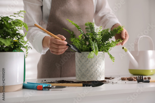 Woman planting fern at white table indoors, closeup - fototapety na wymiar