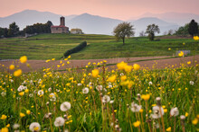 Landscape At Spring With Yellow And White Flowers And A Little Old Church