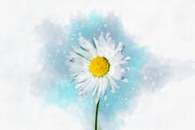 White Daisy Floral Botanical Flower. Watercolor Background Illustration Set. Isolated Daisy Illustration Element.