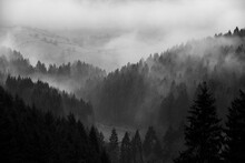 Breathtaking Misty Natural Scene Of Vast Zigzag Hills With Silhouettes Of Trees On A Gloomy Day