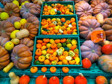 Pumpkin Varieties For Halloween. Ready For Fun And Adornment