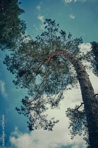 Drzewo wygięte pod naporem wiatru - fototapety na wymiar