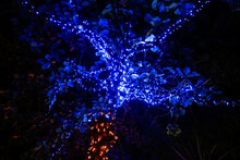 Glowing Blue Lanterns Hang On Trees In Nature