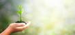Leinwandbild Motiv World environment day concept: hand holding tree over blurred natural background
