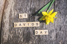 St Davids Day Sign With Tile Letters And Single Yellow Daffodil On Weathered Wood Background. For Day Of Saint David Celebration In Wales, UK