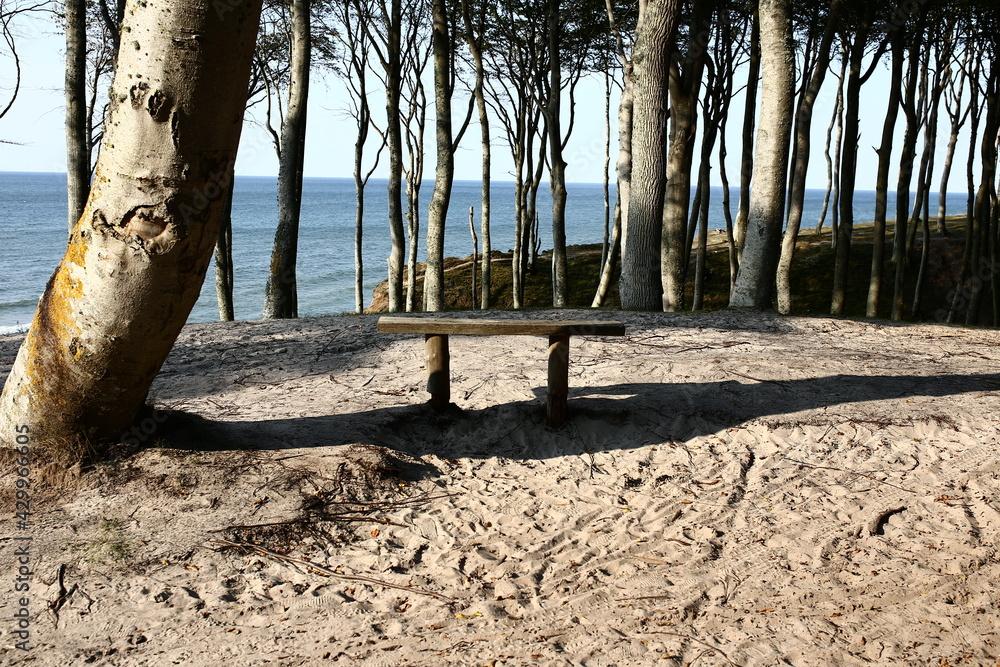Fototapeta Morze bałtyckie ławka las wydmy Poddąbie