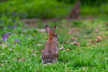 Two Rabbits In The Garden