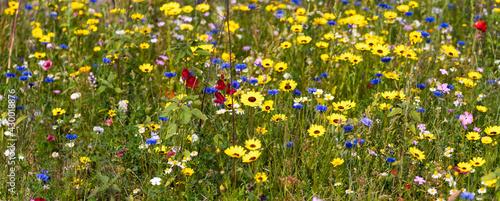 Colorful wildflower meadow in spring - fototapety na wymiar