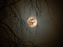 Silhouette Of A Flying Bird Against The Background Of A Full Moon Through The Branches Of A Birch On A Spring Night