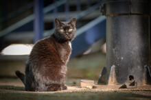 Gatto Nero Con Occhi Gialli In Primo Piano Nel Cortile