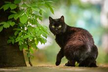 Gatto Nero Con Occhi Gialli In Primo Piano Nel Parco